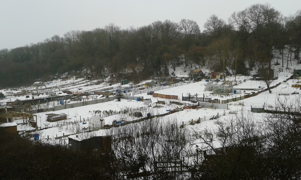 Snow at the allotments, March 2018